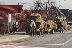 Libearty Bears Transylvania 33 1