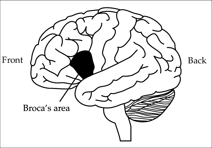 The location of Brocas area in the human brain After Carlson 1994